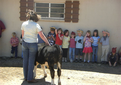 Meet our live farm animals on our real working farm!