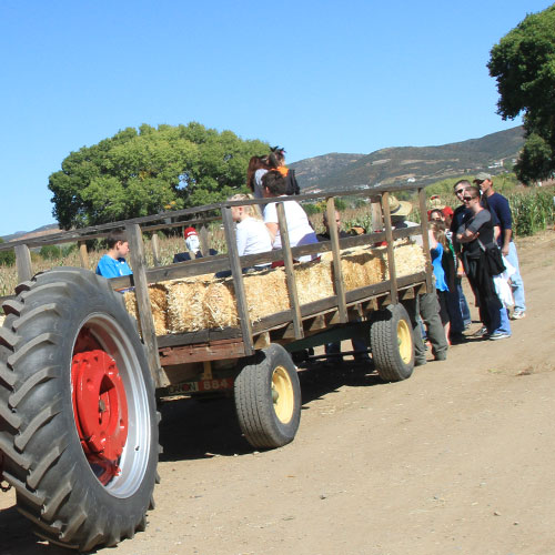 Your family will love our tractor driven hayrides during your family reunion