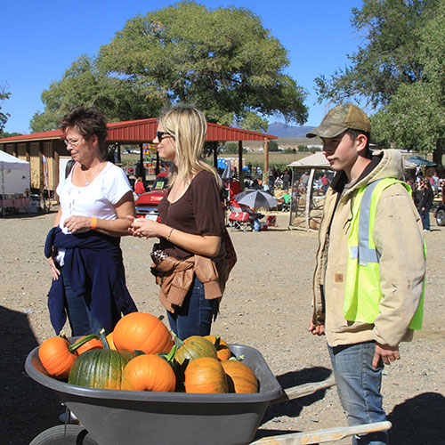 Pick-your-own pumpkins in our pumpkin patch in Dewey outside of Phoenix, Arizona