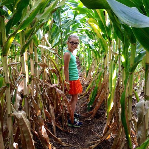 Explore our corn maze and try some delicious sweet corn at our Sweet Corn Festival!