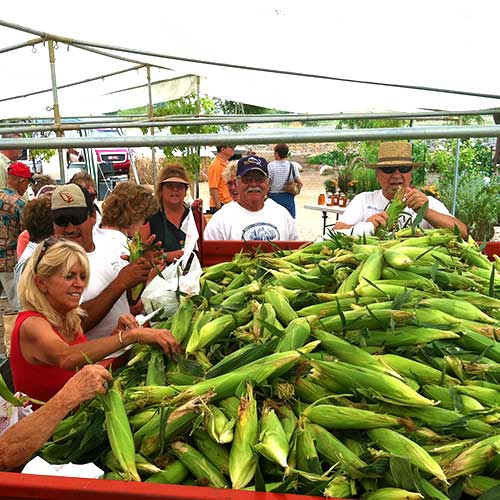 Bite into our locally grown sweet corn fresh from Mortimer Family Farms in Dewey, Arizona