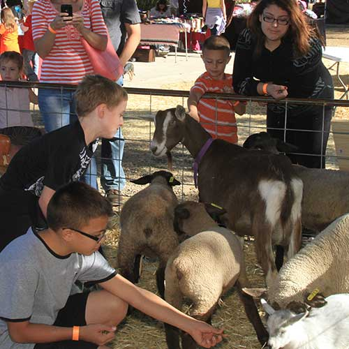 Your group will love our live animals during your family reunion outside of Phoenix in Dewey, Arizona